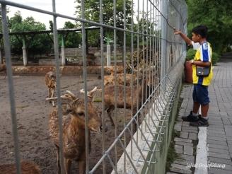 kancil Gembira Loka Zoo