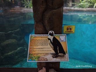 penguin di Gembira Loka Zoo
