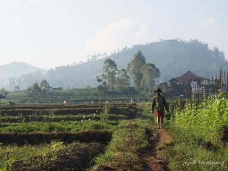 aktivitas petani Pujon Kidul