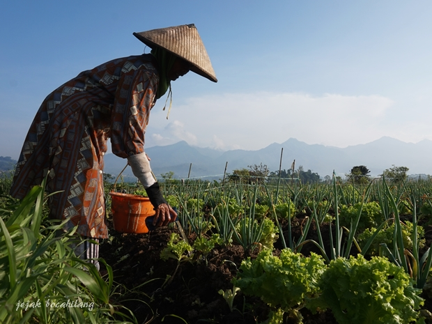 petani Pujon Kidul