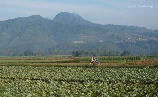 perbukitan di Pujon Kidul Malang