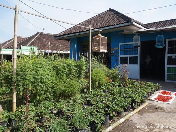 homestay Pujon Kidul