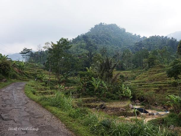 view Petungkriyono