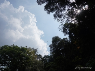elang Jawa Petungkriyono