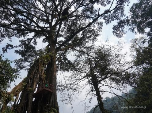 rumah pohon di Welo River