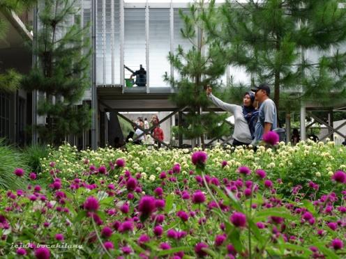 Marigold Plaza